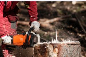 stump removal Sydney w/ chainsaw